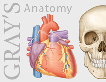 Gray's Anatomy – artwork
